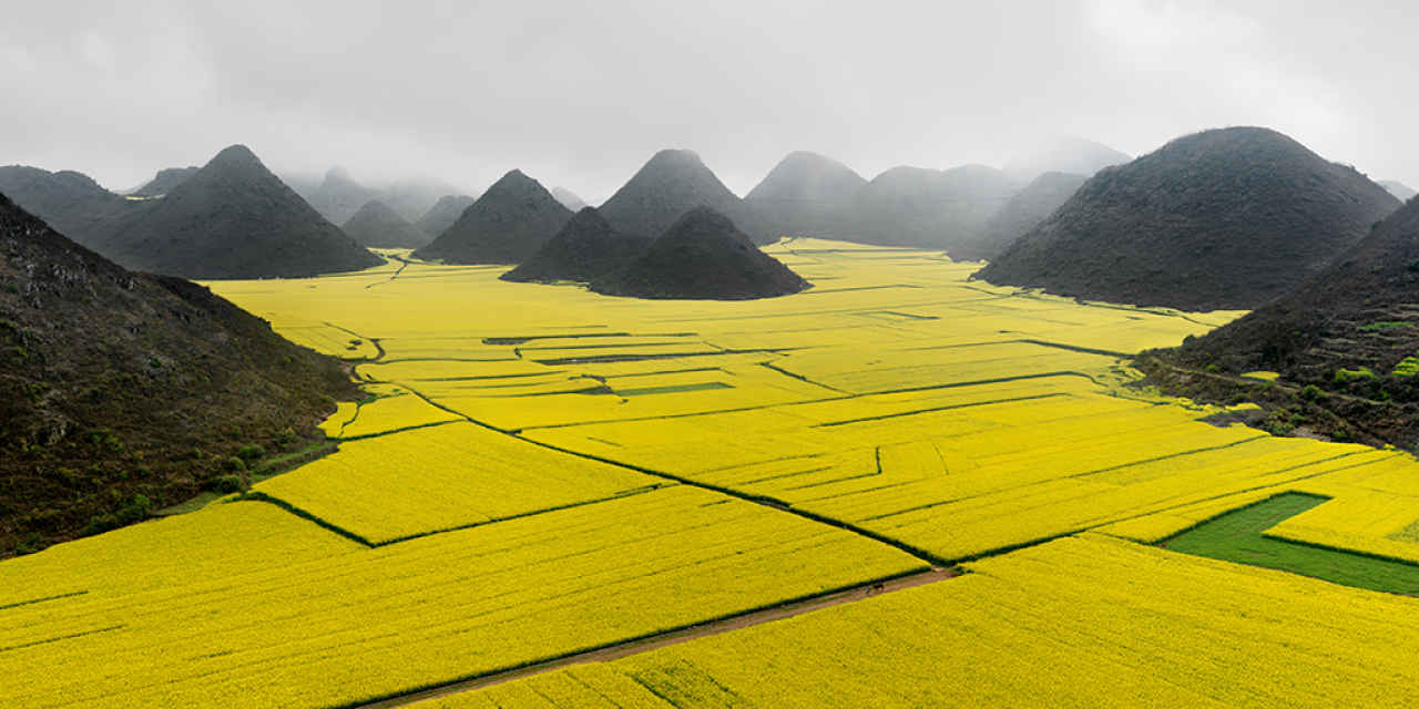 Canola-flower-fields-Yunnan