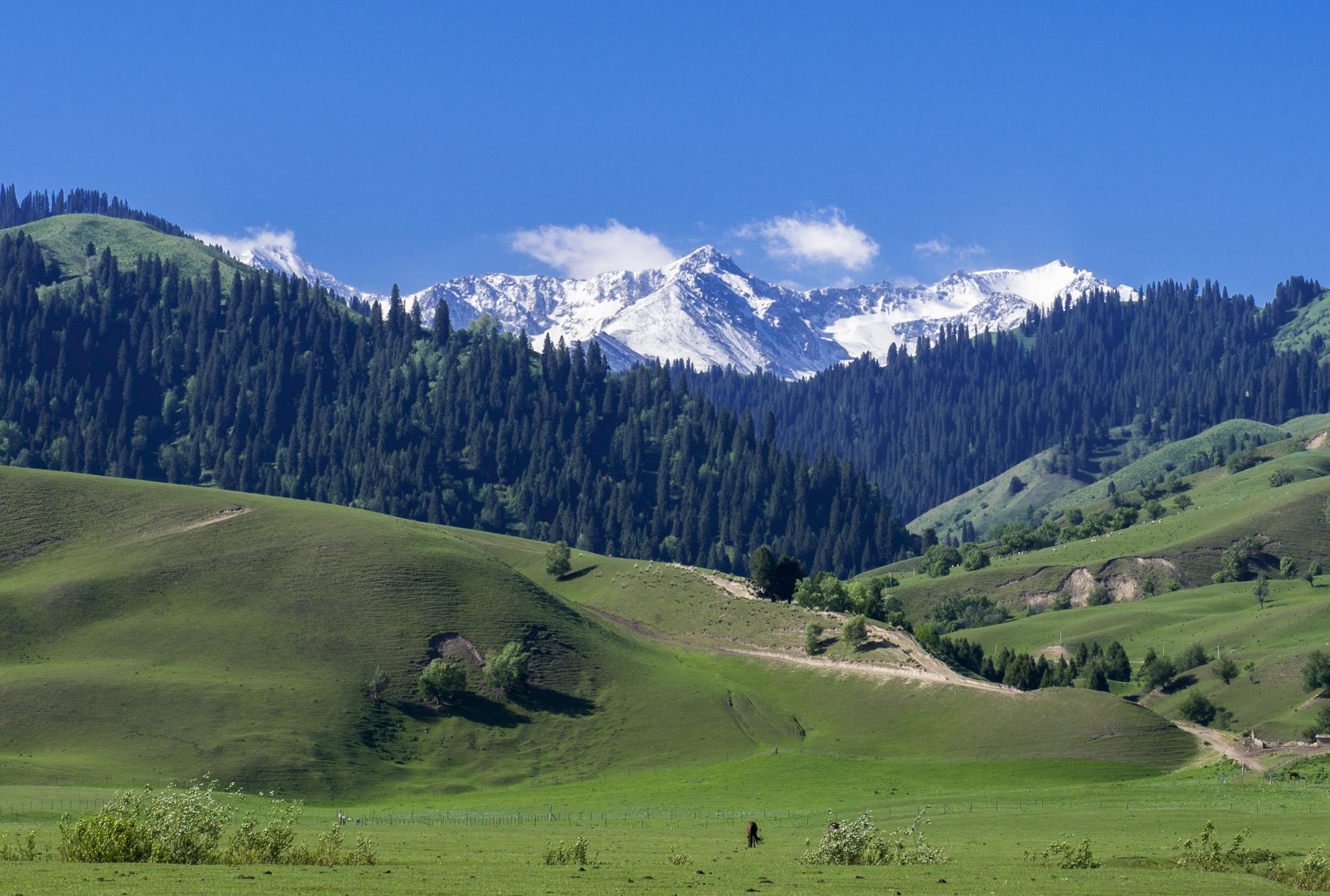 Nalati-Grassland-Xinjiang